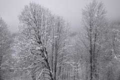 Śnieżny las na Północnym skłonu Aibga grani westernie Kaukaz Zdjęcie Stock