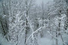 Śnieżny las na Północnym skłonu Aibga grani westernie Kaukaz Fotografia Stock