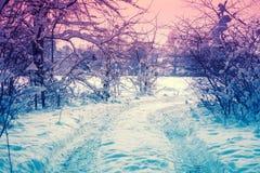 Śnieżny las przy różowym zmierzchem zdjęcia stock