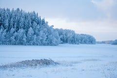 Śnieżny las w zimie Zdjęcia Stock