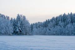 Śnieżny las w zimie Zdjęcie Stock