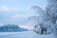 Śnieżny las w zimie Obraz Royalty Free