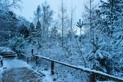 Śnieżny las z ścieżką obraz stock