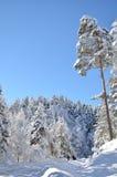 Śnieżny las z jedlinami w zimy bilecika długiej drogi indyczych towads drewno marznący jezioro Zdjęcie Stock