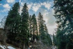 Śnieżny las z niebieskim niebem obrazy royalty free