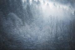 Śnieżny lasowego drzewa krajobrazu tło Zdjęcia Royalty Free