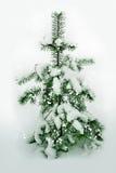 Śnieżny lasowy jedlinowy drzewo Zdjęcia Stock