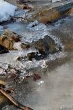 Śnieżny lying on the beach na gałąź świerczyna doskonale nalewa Zdjęcie Stock