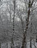 Śnieżny lying on the beach na gałąź świerczyna doskonale nalewa wioska wschód dokąd istna zima mnóstwo śnieg który shimmers Fotografia Royalty Free