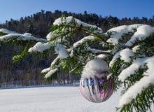 Śnieżny lying on the beach na gałąź świerczyna doskonale nalewa wioska wschód dokąd istna zima mnóstwo śnieg który shimmers Zdjęcia Royalty Free