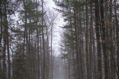 Śnieżny, mglisty lasowy ślad, Obraz Royalty Free