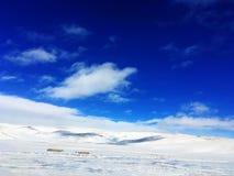 Śnieżny obszar trawiasty w zimie obraz royalty free