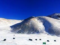 Śnieżny obszar trawiasty w zimie obrazy stock