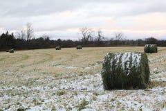 Śnieżny odziany siano fied fotografia royalty free