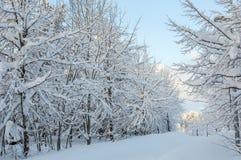 Śnieżny park w Tiller, Trondheim, Norwegia zdjęcia stock