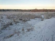 Śnieżny pole zdjęcia stock