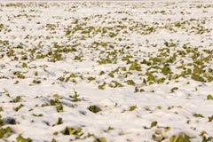 Śnieżny pole Obrazy Royalty Free