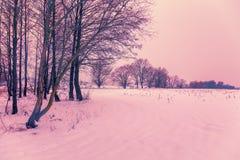 Śnieżny pole z drzewami obraz royalty free