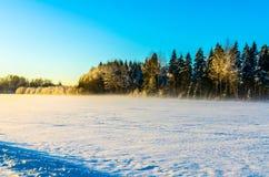 Śnieżny pole z lasowym tłem pod jasnym niebieskim niebem Obrazy Stock