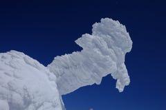 Śnieżny ptak w Japonia Fotografia Stock