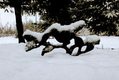 Śnieżny ptaka skąpanie Zdjęcie Stock
