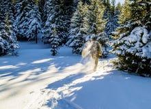 Śnieżny pył zdjęcie royalty free