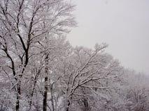 Śnieżny ranek Obrazy Royalty Free