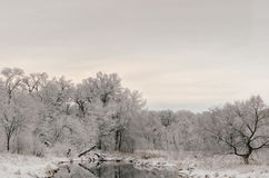 Śnieżny ranek Zdjęcia Stock