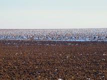 Śnieżny rolniczy pole Obraz Royalty Free