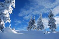 Śnieżny sosnowy las Obraz Stock