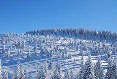Śnieżny Sosnowy las Zdjęcia Stock