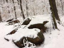 Śnieżny spadek fotografia royalty free