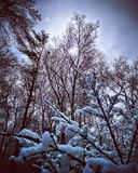 Śnieżny spadek Obraz Royalty Free