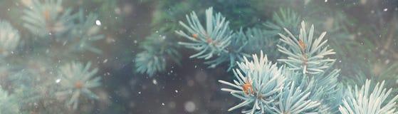 Śnieżny spadek w zimy natury magii lasowym Bożenarodzeniowym sztandarze Fotografia Stock