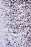 Śnieżny tło na drzewie fotografia royalty free
