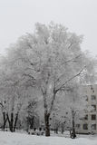 Śnieżny wielki drzewo zakrywający dżdża patrzeje bardzo ładnym Obraz Stock