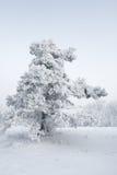 śnieżny wsi drzewo fotografia stock