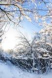 Śnieżny zima las Zdjęcie Stock