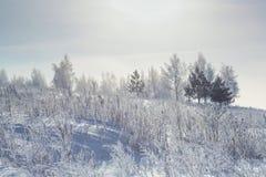 Śnieżny zima las w ranku Fotografia Royalty Free
