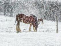 Śnieżny zima ranek Zdjęcie Royalty Free