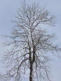 Śnieżny zimy drzewo Zdjęcie Royalty Free