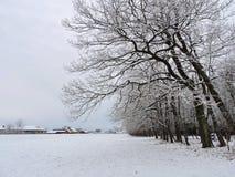 Śnieżny zimy drzewo Obrazy Stock