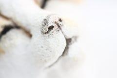 śnieżny zwierzę biel Zdjęcia Royalty Free