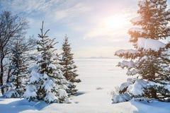 Śnieżyści drzewa blisko zamarzniętego jeziora Fotografia Stock