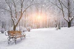Śnieżyści drzewa i ławki w miasto parku Zdjęcia Royalty Free