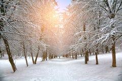 Śnieżyści drzewa w miasto parku Fotografia Royalty Free