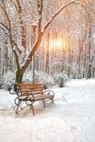 Śnieżyści drzewa w miasto parku Zdjęcia Stock