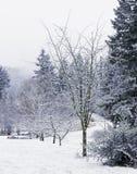 śnieżyści zim drzewa Wzdłuż drogi Zdjęcia Royalty Free