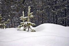 śnieżyców drzewa dwa potomstwa Zdjęcie Stock