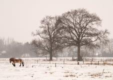 śnieżyca Obrazy Stock